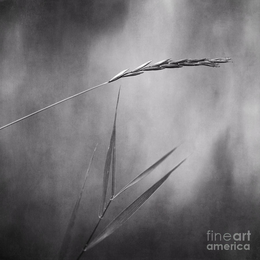 Spike Photograph - I Will Hold You In Black And White by Priska Wettstein