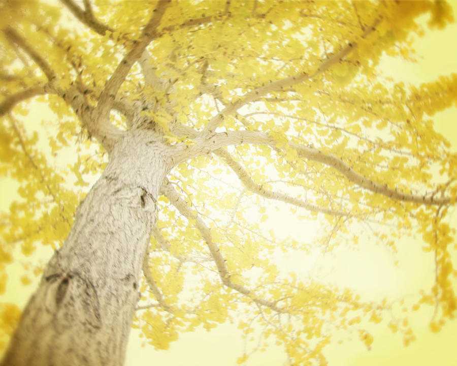 Yellow Tree Photograph - I Will Remember You by Amy Tyler