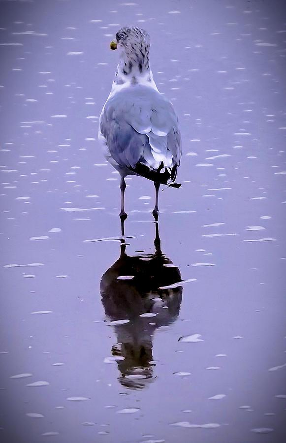 Sea Birds Photograph - I Will Wait by William Walker