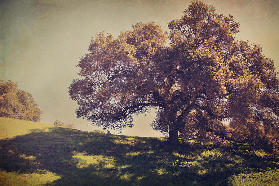 Dry Creek Hills Regional Park Photograph - I Wish You Had Meant It by Laurie Search