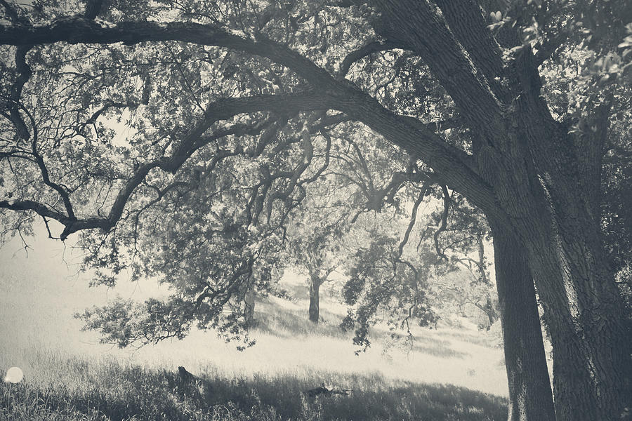 Mt. Diablo Photograph - I Would Wrap My Arms Around You by Laurie Search