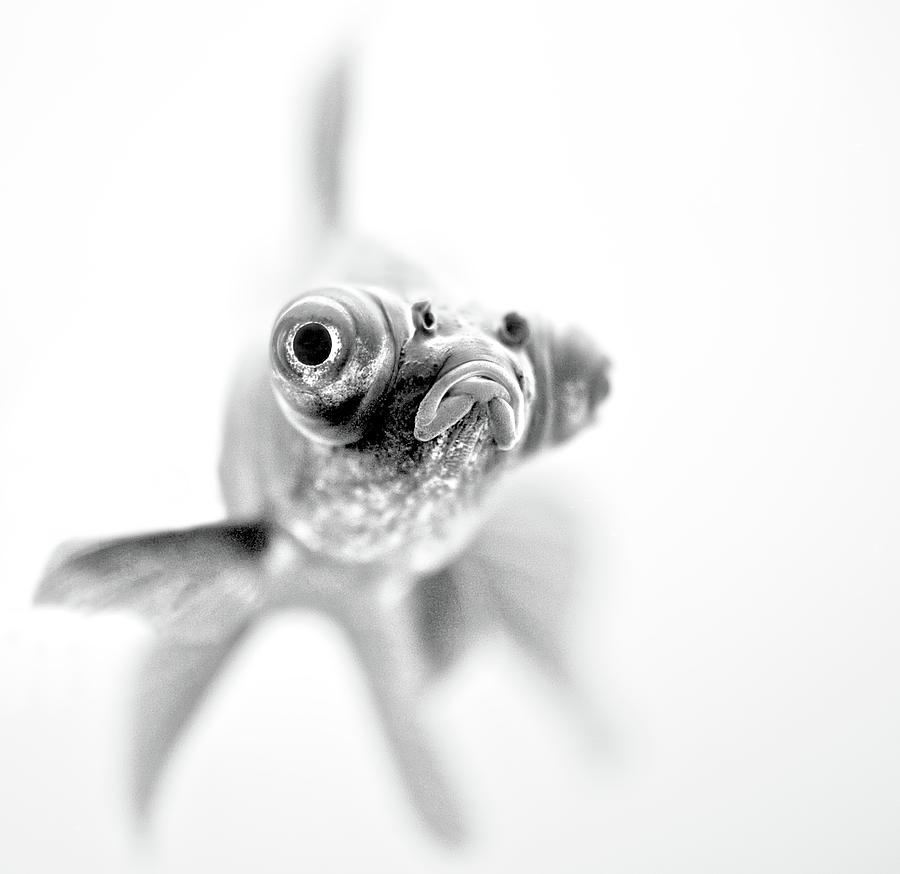 Fish Photograph - I'm Ready For My Close Up... by
