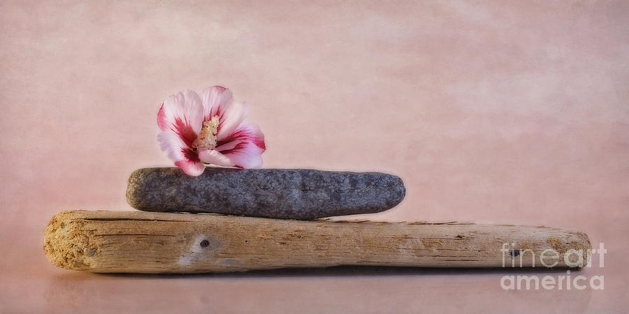 Hibiscus Photograph - Ibisco by Priska Wettstein