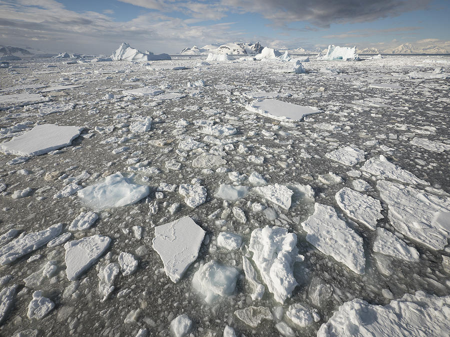 Ice Floes Antarctica Photograph by Gerry Ellis