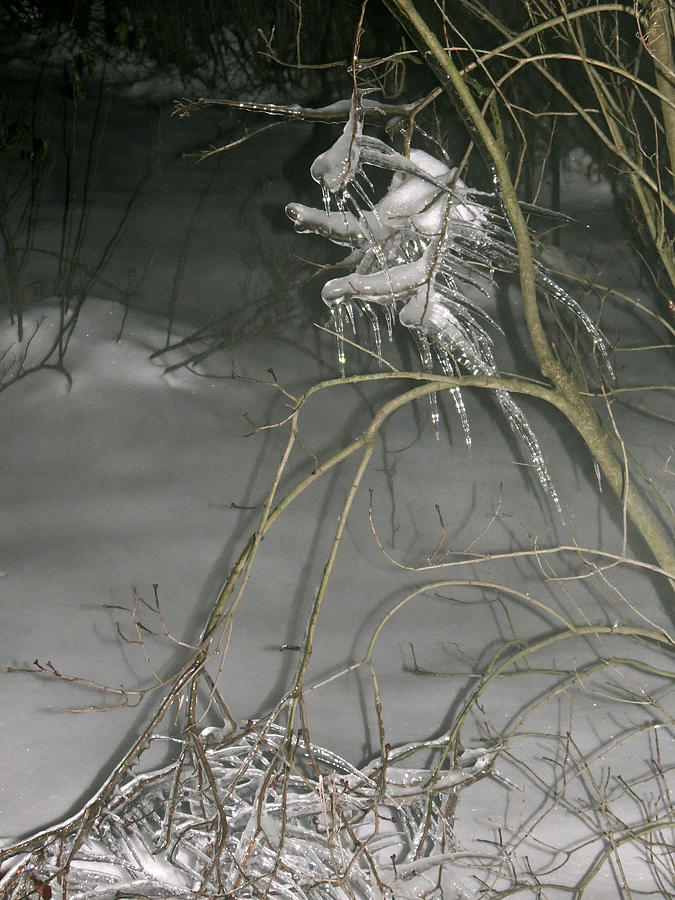 Winter Photograph - Ice Imp by Azthet Photography