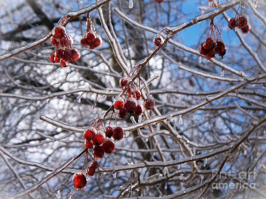 Ice On The Crab-apples Photograph - Ice On The Crab-apples by Joy Nichols