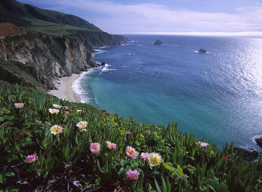 Ice Plants on Big Sur Coast Photograph by Tim Fitzharris