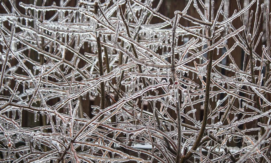 Winter Scenes Photograph - Ice Storm by Arlene Carmel