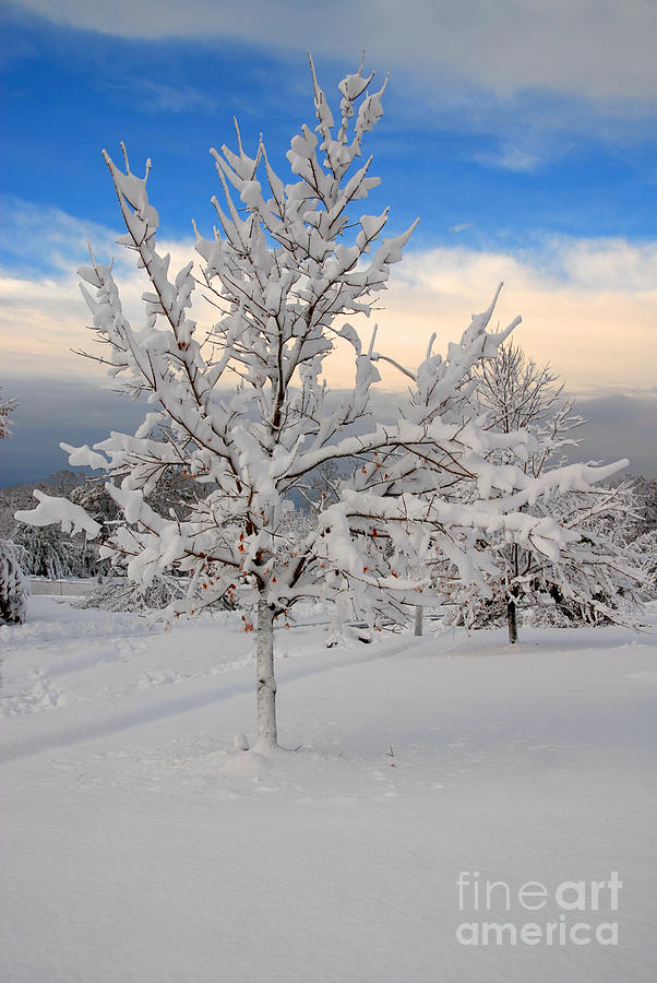 Ice Tree Photograph - Ice Tree by Fred Cerbini
