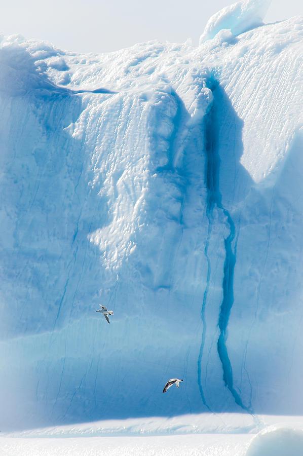 Iceberg Photograph - Ice Wall by David Pinsent