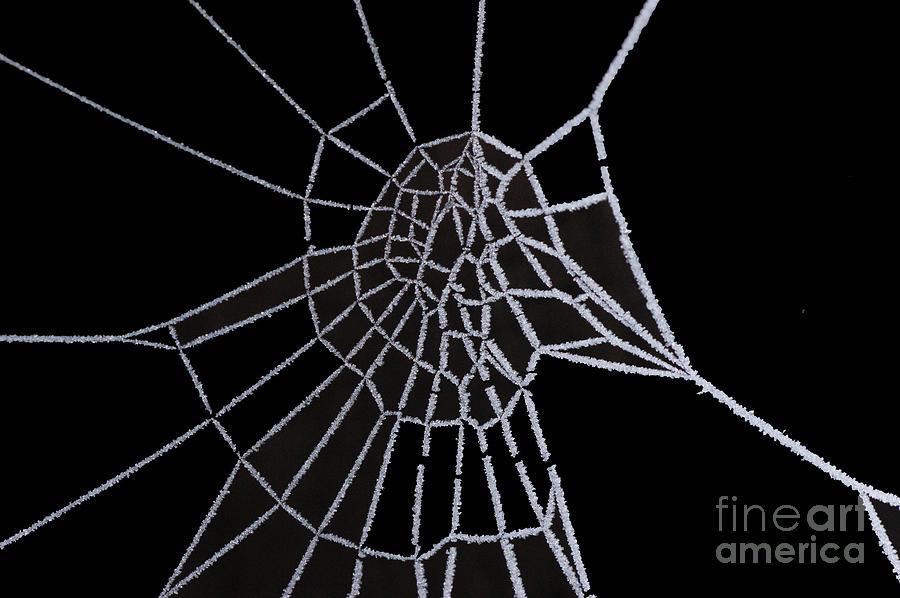 Ice Digital Art - Ice Web by Carol Lynch