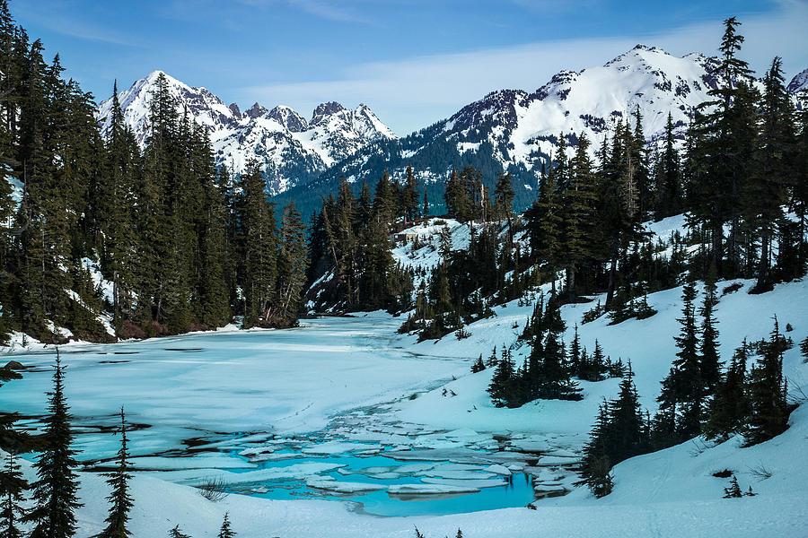 Mt Photograph - Iceberg Forest by Ryan McGinnis