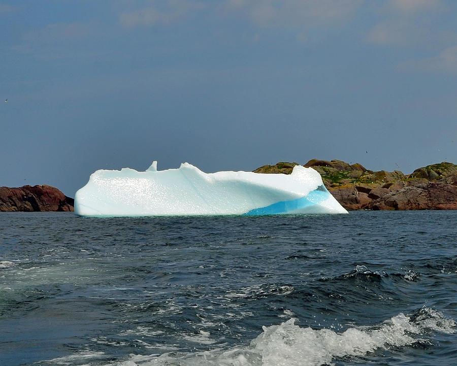 Iceberg off Little Fogo Islands Newfoundland by Lisa Phillips