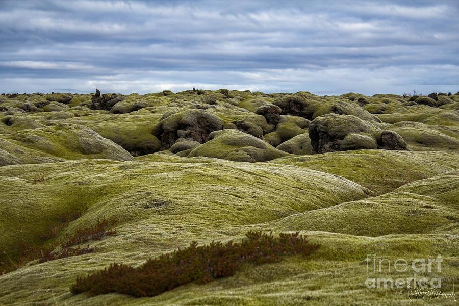 Desert Photograph - Icelandic Moss by Miso Jovicic