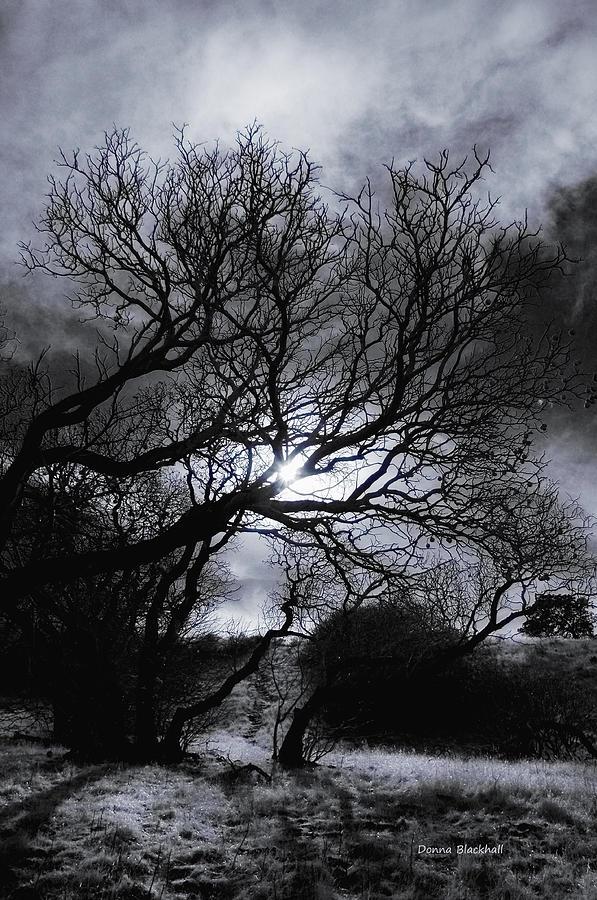 Legend Photograph - Ichabods Pathway by Donna Blackhall