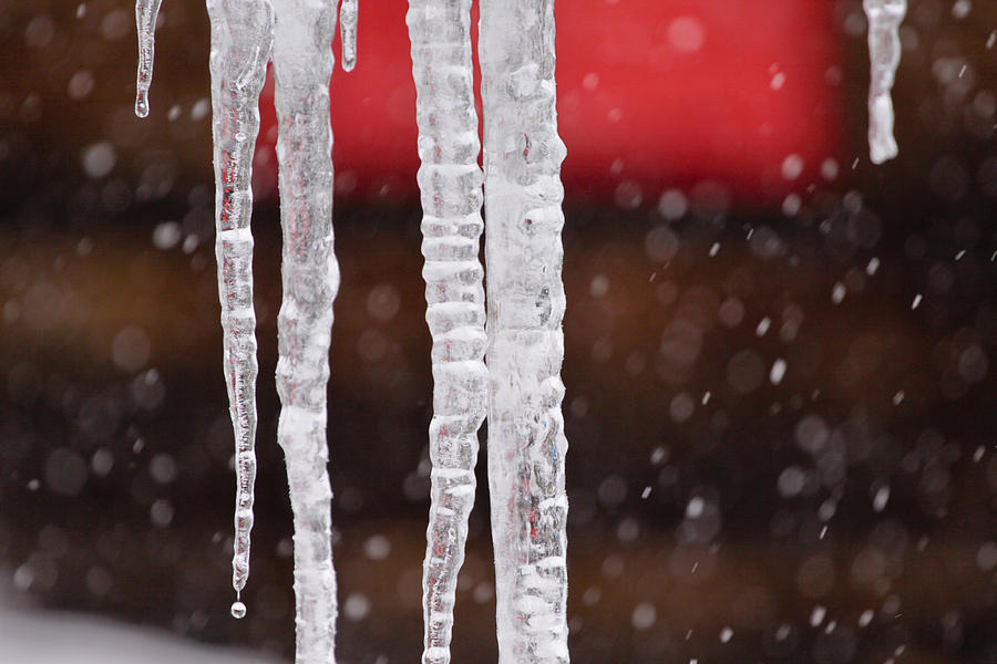 Icicle Photograph - Icicles by Denice Breaux