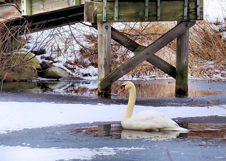 Pond Photograph - Icy Pond by Janice Drew