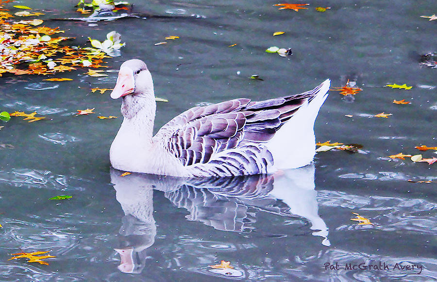 Goose Photograph - Id Rather Be Purple by Pat McGrath Avery