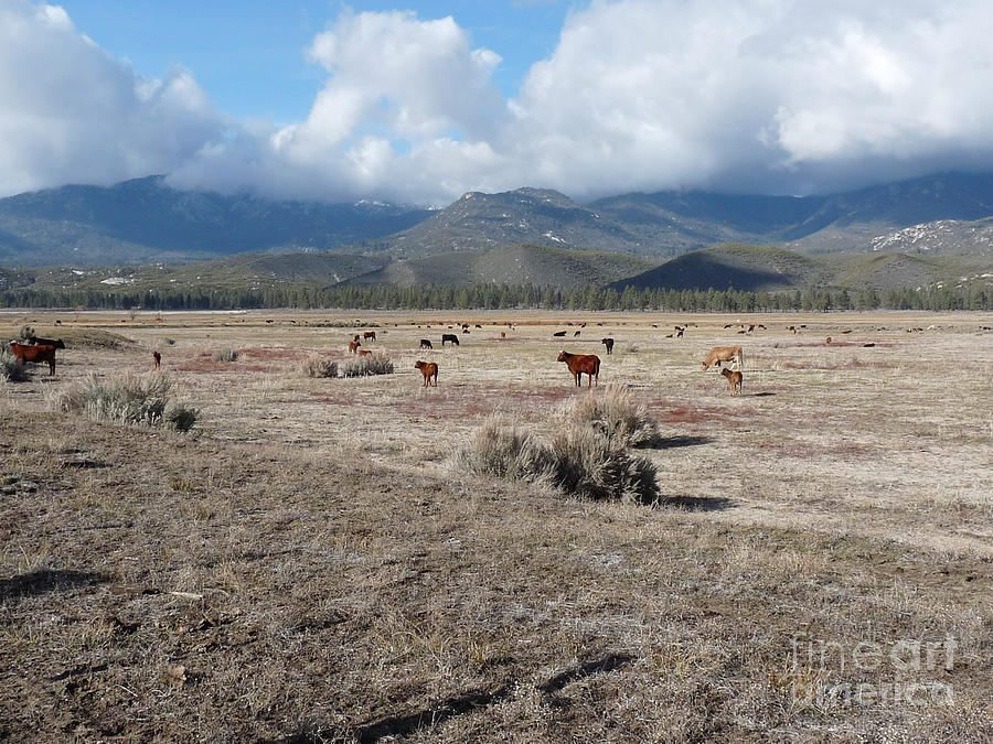 Idlewild Photograph - Idlewild Herd 2 by Deborah Smolinske