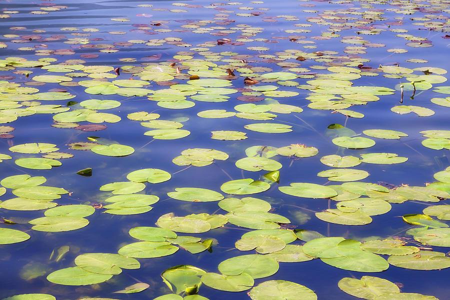 Beautiful Photograph - Idyllic Pond by Joana Kruse