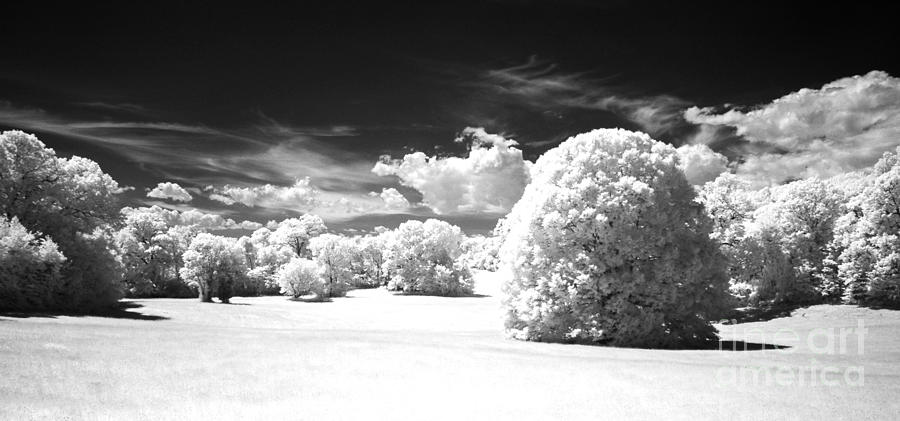 Infared Photograph - If  1 by Alan Russo