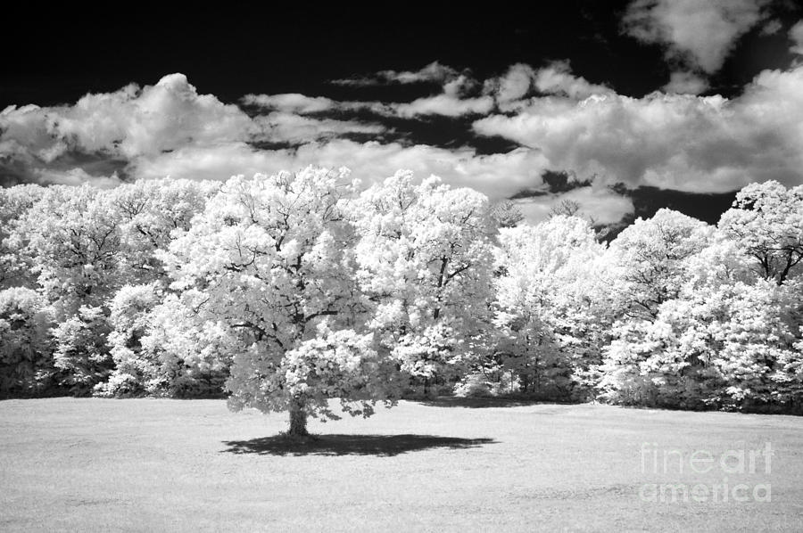 Infared Photograph - If  2 by Alan Russo
