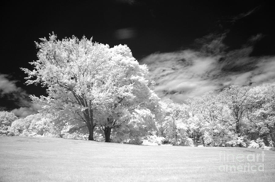 Infared Photograph - If 3 by Alan Russo