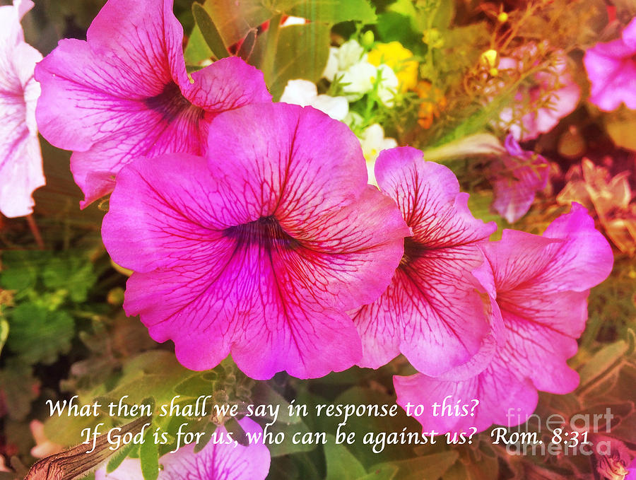 Scripture Photograph - If God Is For Us Who Can Be Against Us by Maggie Vlazny