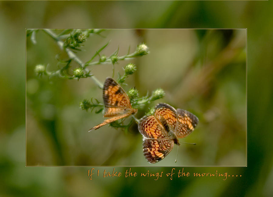 Butterflies Photograph - If I Take The Wings Of The Morning by Denise Beverly