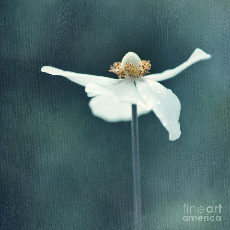 Floral Photograph - If  Petals Were Wings by Priska Wettstein