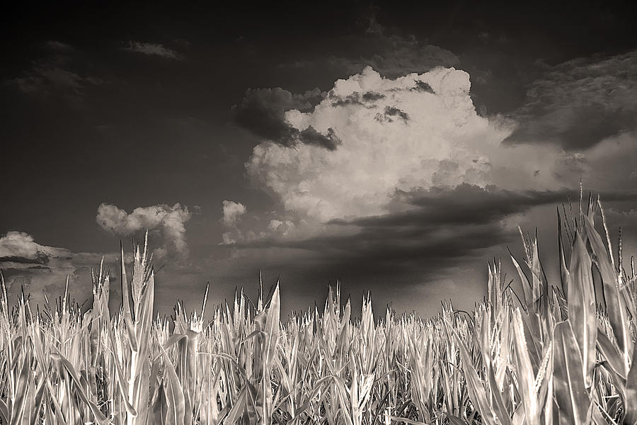 Field Of Dreams Photograph - If You Build It He Will Come by William Fields