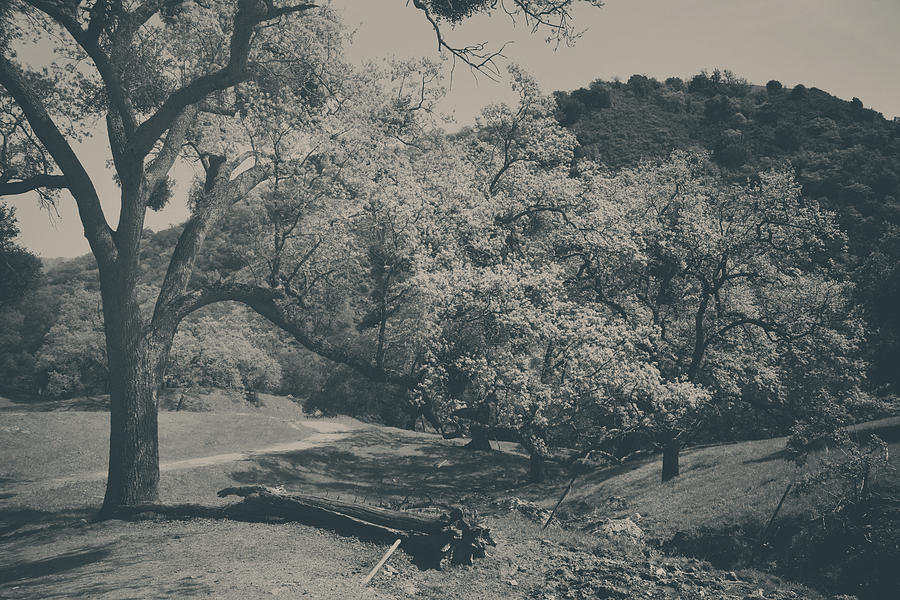 Sunol Regional Wilderness Photograph - If You Get Lonely by Laurie Search