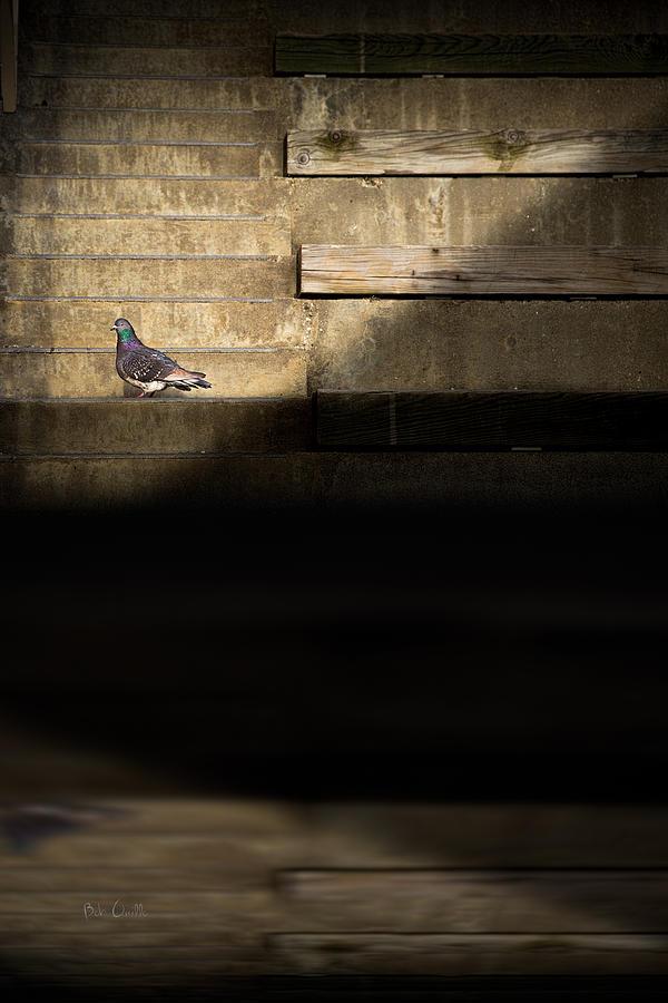 Stair Photograph - Il Piccolo Guardiano by Bob Orsillo
