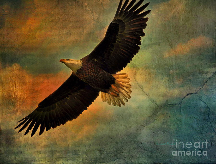 Eagle Photograph - Illumination Of Spirit by Deborah Benoit