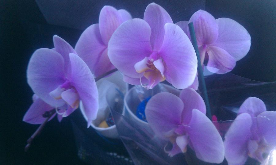 Orchid Digital Art - Illusion by James Thornsbury