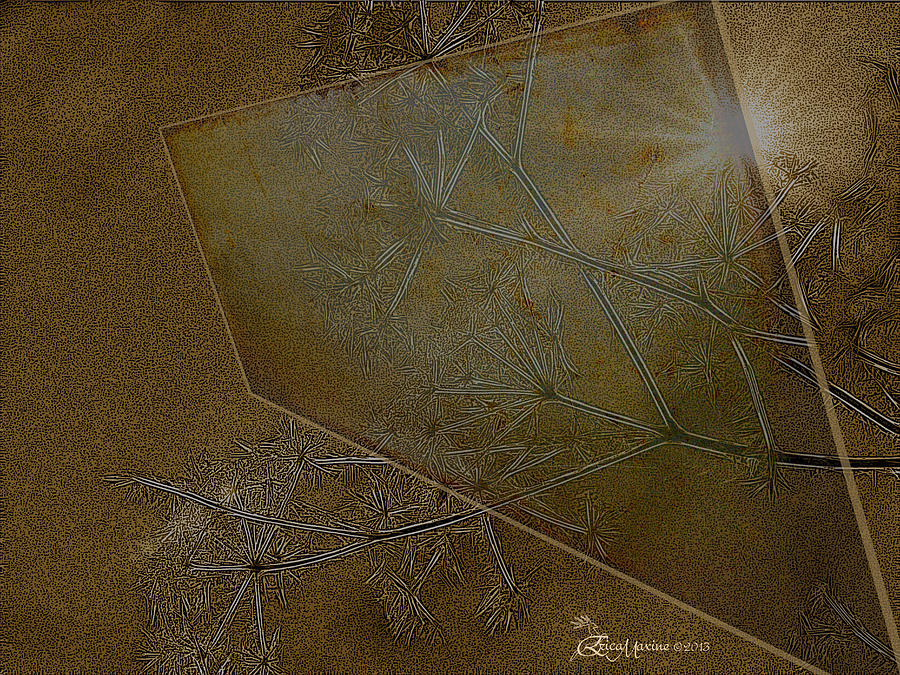 Weeds Photograph - Illusions by Ericamaxine Price