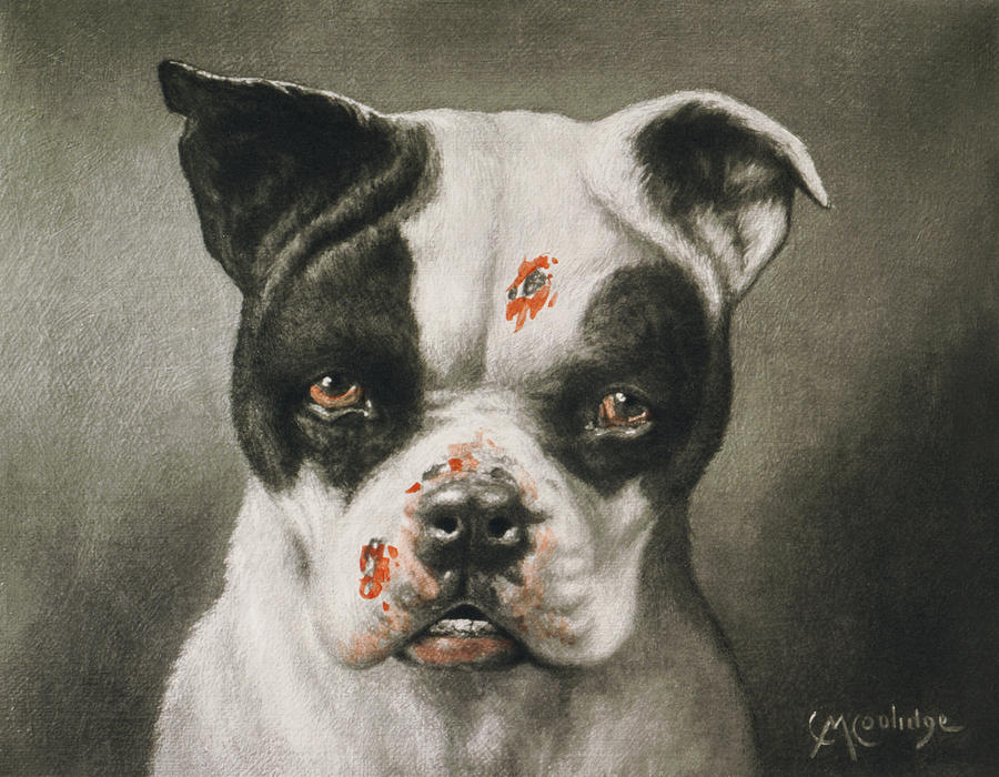 Boston Terrier Painting - Im A Bad Dog What Kind Of A Dog Are You Circa 1895 by Aged Pixel