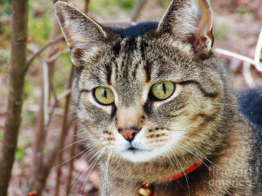 Cat Photograph - Im Beautiful by Judy Via-Wolff