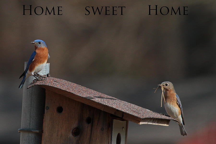 Bluebirds Photograph - Im Gonna Make This House A Home by Michael Rucci