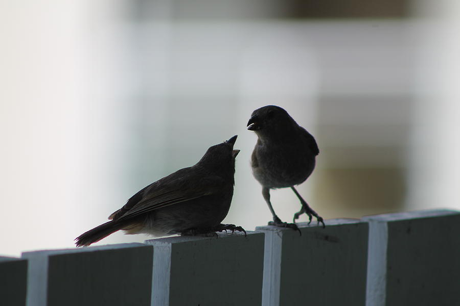 Birds Photograph - Im Hungry by Catie Canetti