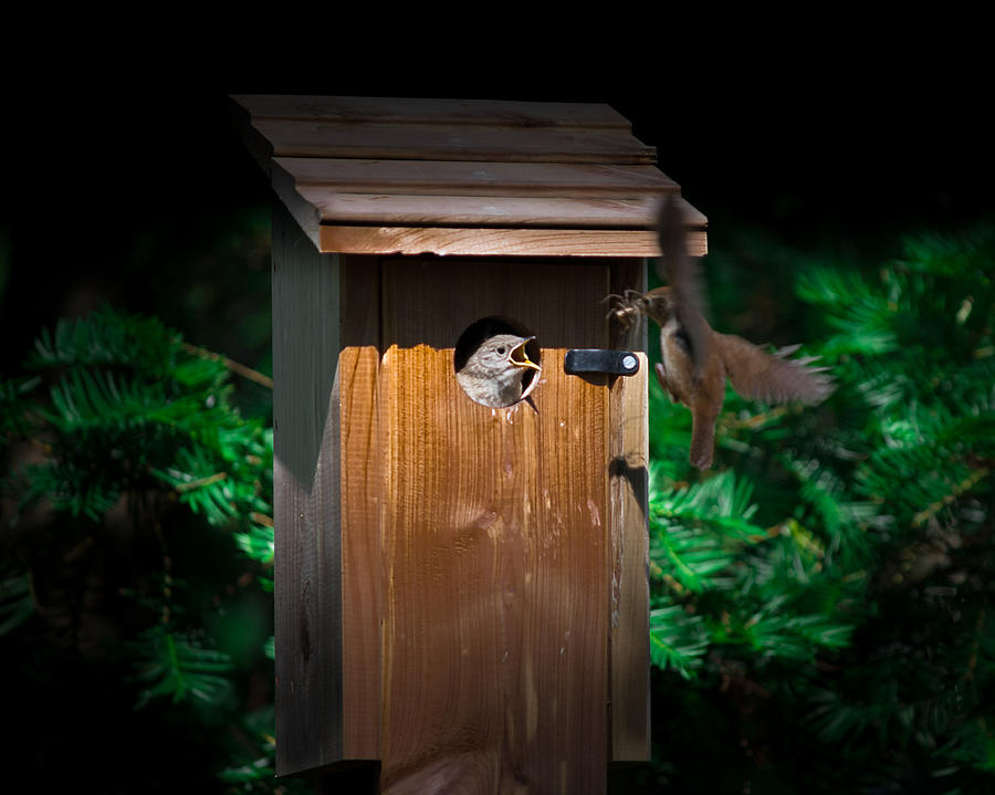 Mama Bird Photograph - Im Hungry by Kenneth Cole