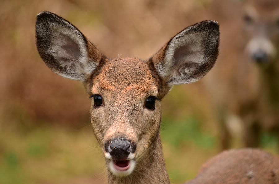 Deer Photograph - Im Never Alone by Lori Tambakis