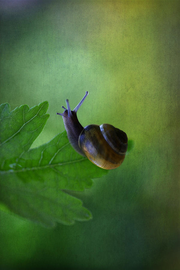 Nature Photograph - Im Not So Fast by Annie Snel