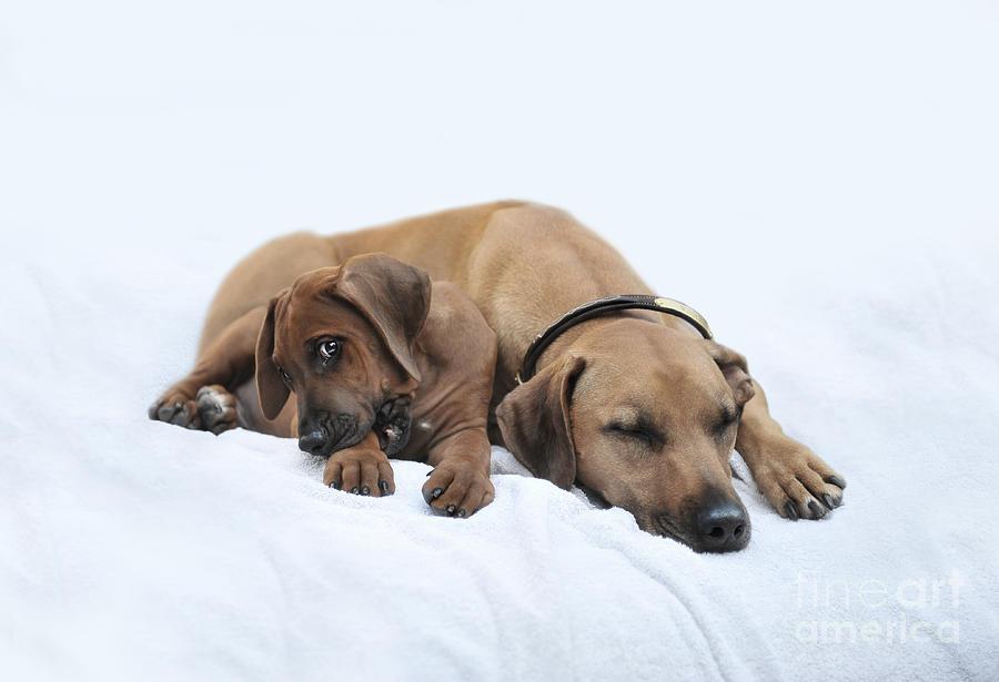 Dogs Photograph - Im Not Tired  by Lena Lottsfeldt Vincken