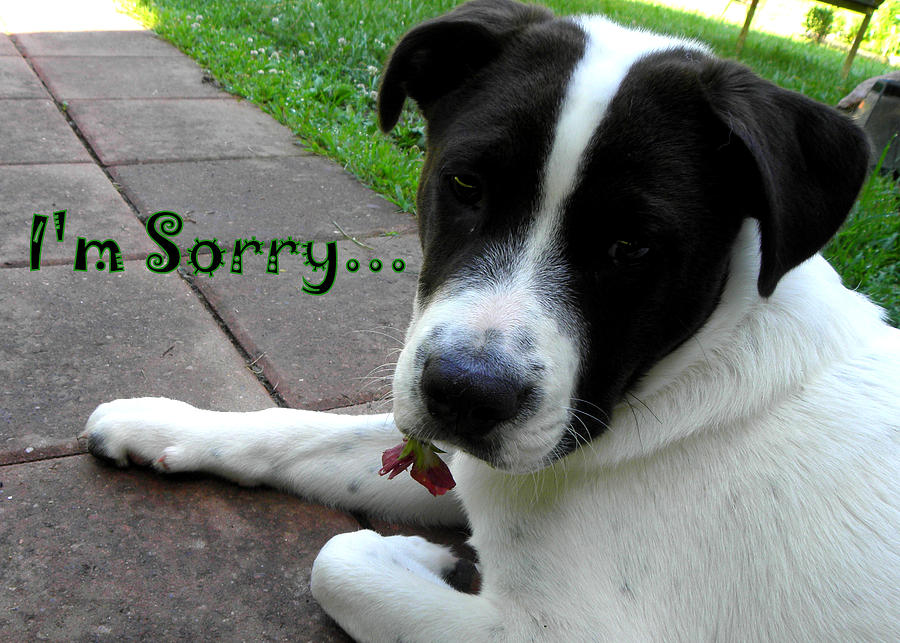 Dog Photograph - Im Sorry  by Kim Galluzzo Wozniak