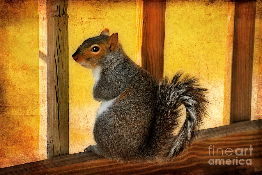 Squirrel Photograph - Im Sorry by Lois Bryan