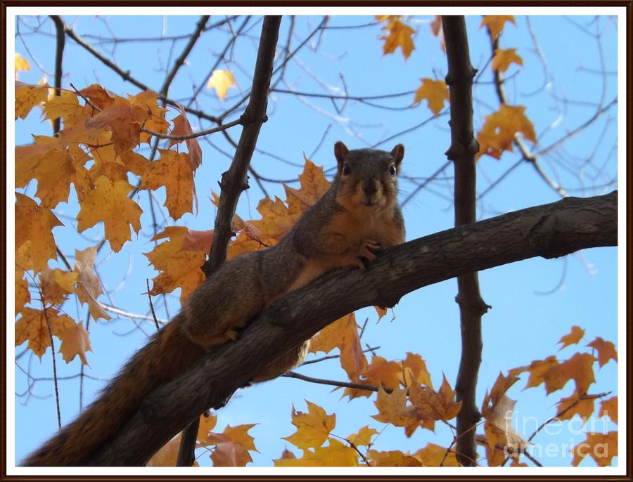 Squirrel Photograph - Im Watching You by Sara  Raber