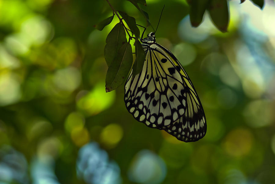 Butterfly Photograph - Imagine A World Without Butterfies by Michael Rucci
