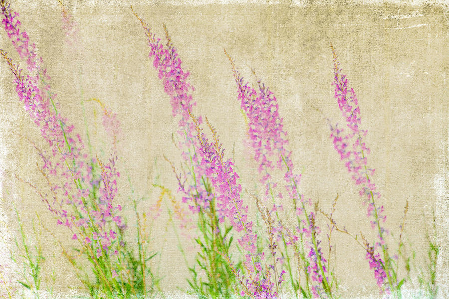 Impressionistic Photograph - Impressions Of Spring by Bonnie Bruno