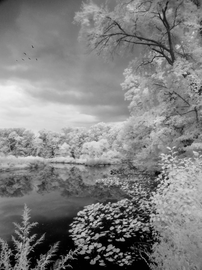 Infrared Photograph - In A Dream by John Rivera